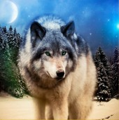 Q-K3.2 Z171 Diamond Painting Set Square Stones Full Wolf 30x30cm