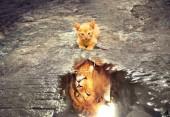 Q-G6.1  S844 Diamond Painting Set  Cat - Lion 50x40cm