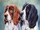 Z-A3.3 RA3187 Paint By Number Set Dogs 40x30cm