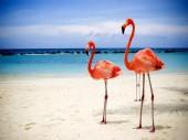 S227 Diamond Painting Set Flamingos 50x40cm