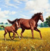 Q-I7.1 Z147 Diamond Painting Set Square Stones Full Horses Family 30x30cm
