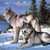 Q-D6.1 Z127 Diamond Painting Set Square Stones Full Wolves 30x30cm