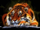 T-E8.2 X213 Diamond Painting Set Tiger 40x30cm