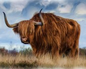 T-N3.2 GM0015 Diamond Painting Set Highland Cow 50x40cm